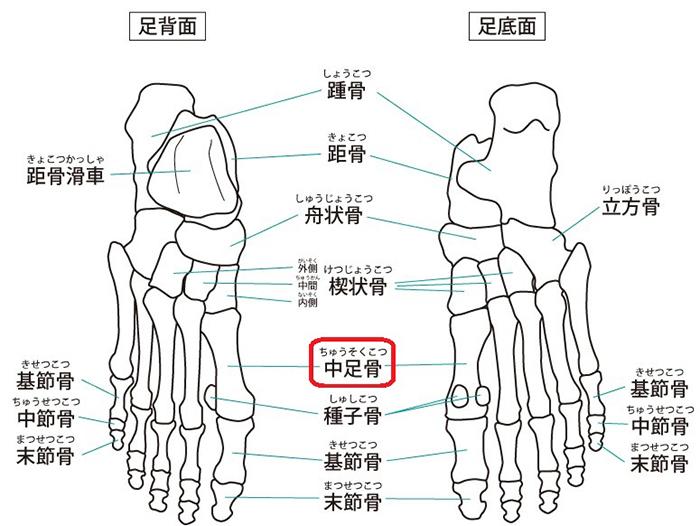 足の骨の名称